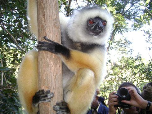 Aires Protégées : Un renforcement de capacité pour les acteurs de conservation