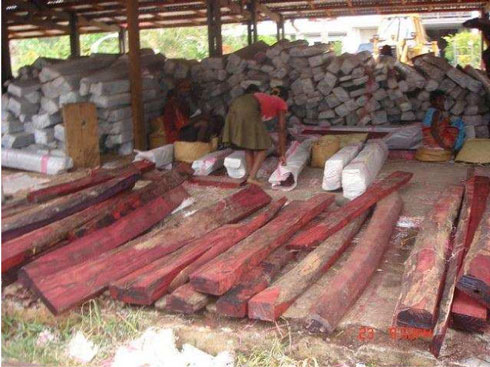 Trafics de bois de rose : Mesures drastiques prises en Conseil de Gouvernement