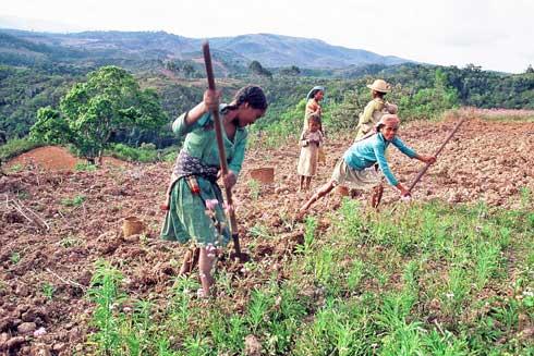 Changement  climatique : 320 000 exploitants agricoles  soutenus par le programme DEFIS