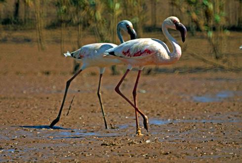 Pollution plastique marine et continentale : Menace d'extinction sur les oiseaux marins et migrateurs