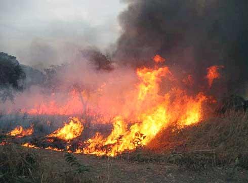 Destruction de l'environnement : Quid de l'efficacité des autorités ?