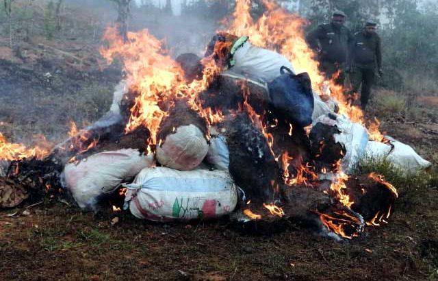 Ambalavao :MD ireo nibizina rongony 25 gony