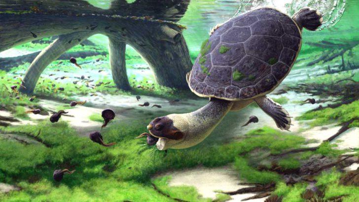"Science :""Sahonachelys mailakavava"", une espèce de tortue révélée à Maevarano"
